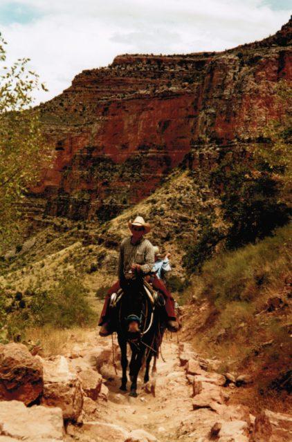 mule au Grand Canyon