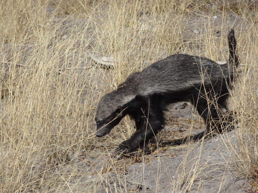 vacances Namibie animaux