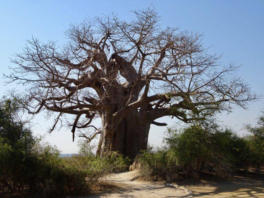 Namibie voyage Vacances Caprivi