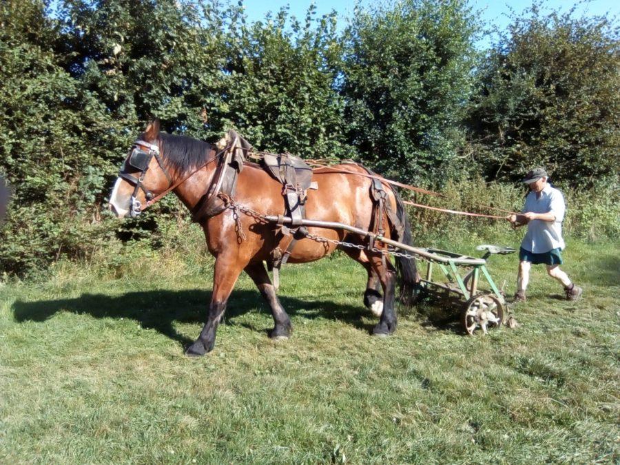 tondre la pelouse avec un cheval à la campagne